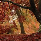 Dazzling autumn colour by miradorpictures