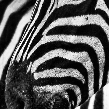 Zebra by KushDesigns