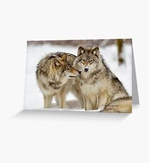 Love you sweetie... - Timber Wolves Greeting Card