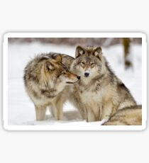 Love you sweetie... - Timber Wolves Sticker
