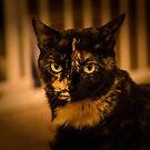 Miau! von Corri Gryting Gutzman