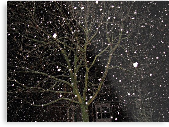 Falling Snow - Night Scene by BlueMoonRose