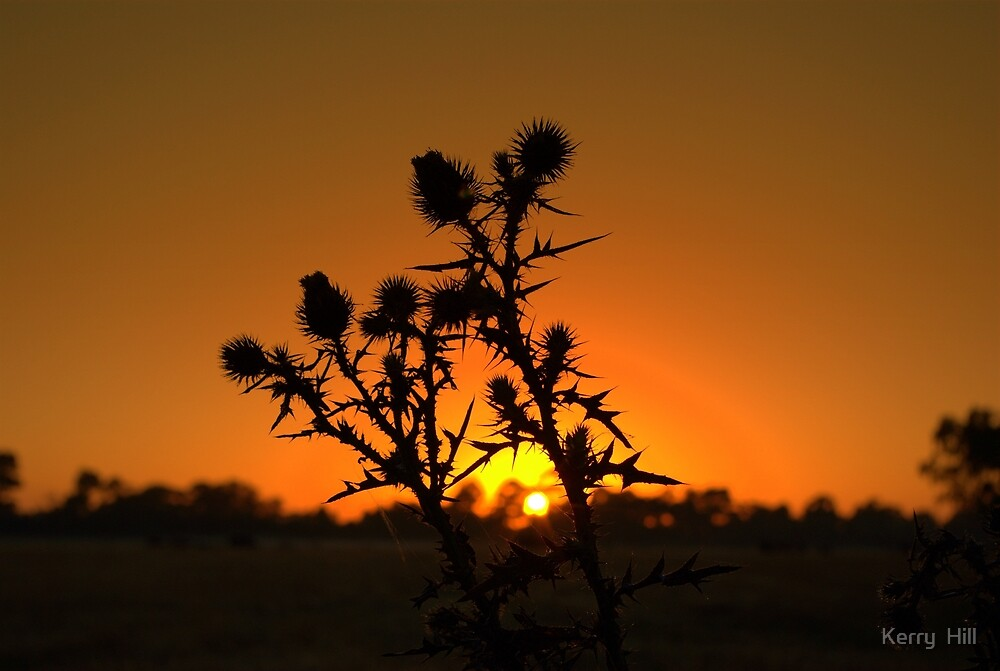 Silhouette by Kerry  Hill