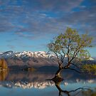 That Wanaka Tree - New Zealand by Lorraine Creagh