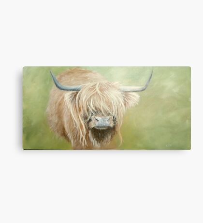 Hairy coo (cow) in grass Metal Print