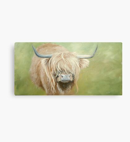 Hairy coo (cow) in grass Canvas Print