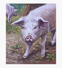 Pink Pig Portrait Photographic Print