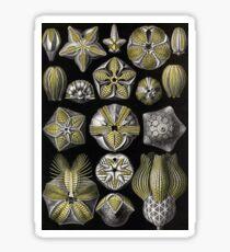 Blastoidea - Ernst Haeckel Sticker