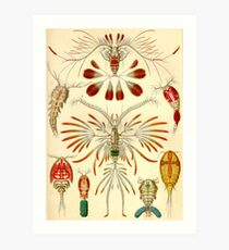 Copepoda - Ernst Haeckel Art Print