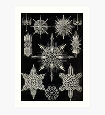 Acanthophracta - Ernst Haeckel  Art Print