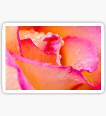 Water drops on rose flower Sticker