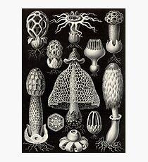 Basimycetes - Ernst Haeckel  Photographic Print
