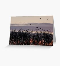 Rooks flock to roost Greeting Card
