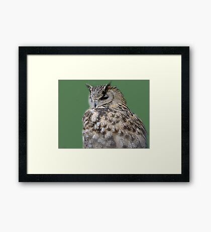 Soft Back Feathers Framed Print