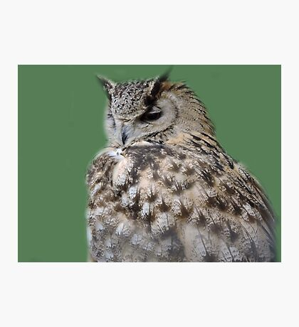 Soft Back Feathers Photographic Print