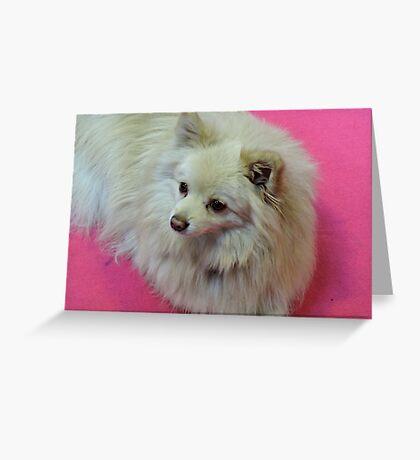 German Spitz: Hot Pink Greeting Card