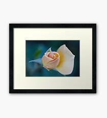rose in the garden Framed Print