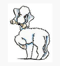 Bedlington Terrier Rosie Photographic Print