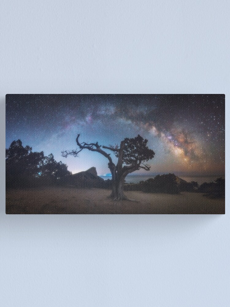 Alternate view of Old juniper Canvas Print
