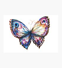 Vibrant colored butterfly Photographic Print