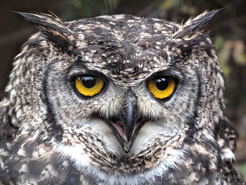 Wise Owl by blackdot