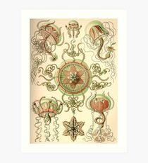 Trachomedusae - Ernst Haeckel  Art Print