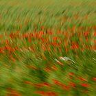 Poppy Swirl by diggle