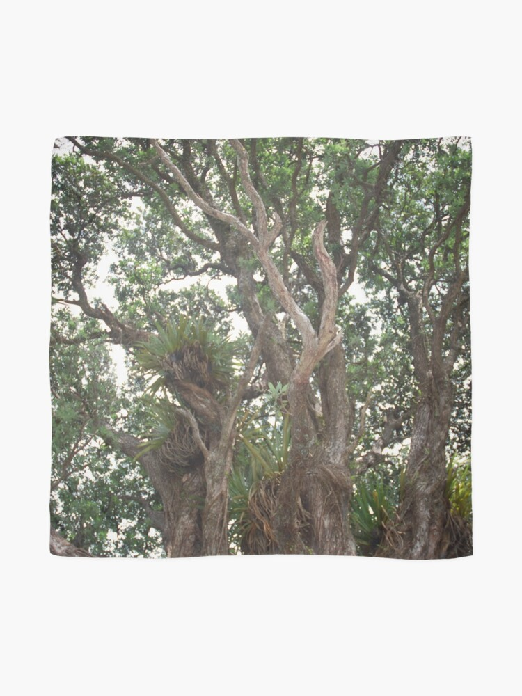 Alternate view of Canopy of Pohutukawa Scarf