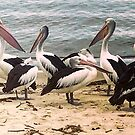 Pelicans on the Beach by styles