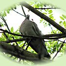 Mourning Dove Vignette by BlueMoonRose