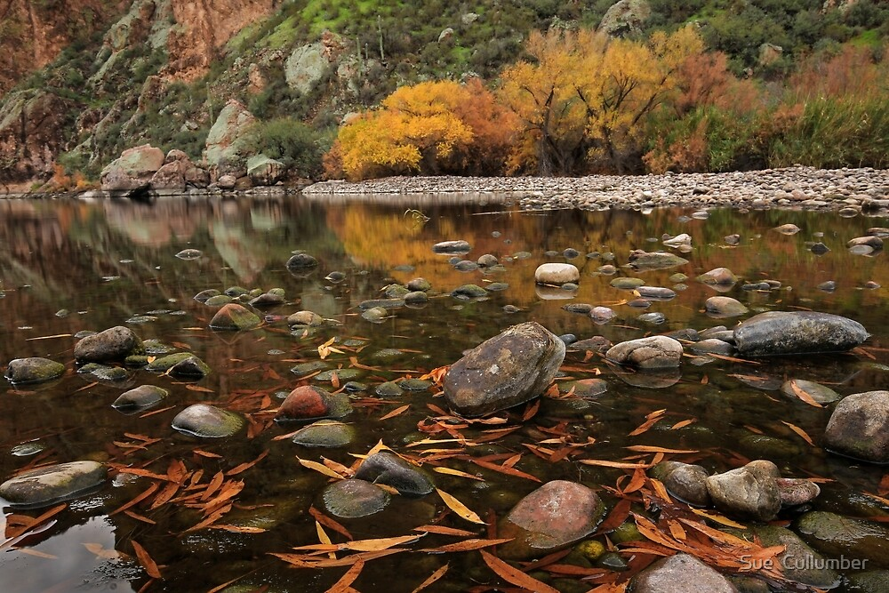 Fallen Leaves along the River by Sue  Cullumber