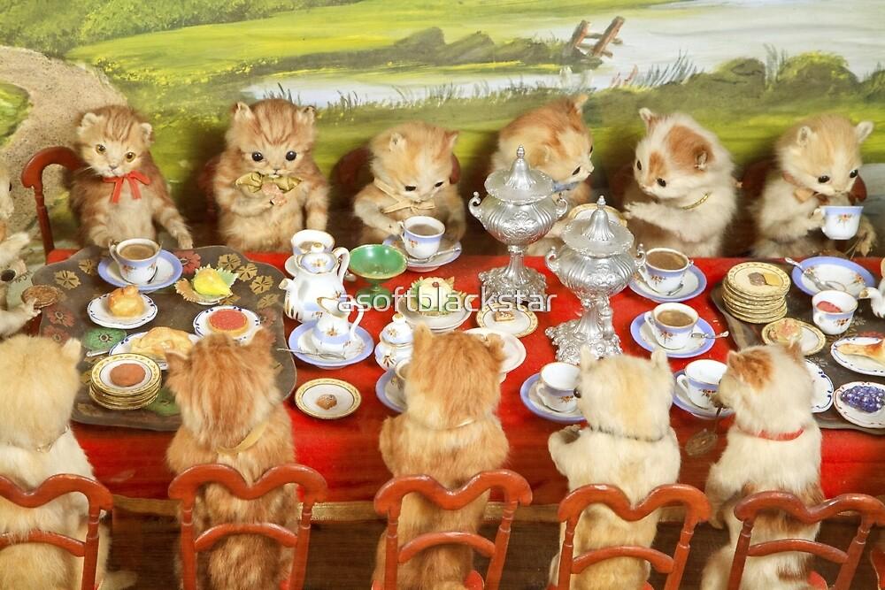 cats by asoftblackstar