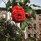 Flower Close-Up, Van Vorst Park, Jersey City, New Jersey by lenspiro