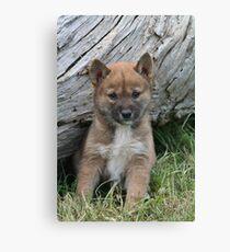 Dingo  Pup Canvas Print