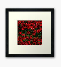 Poppy fields of remembrance for WW1 at Tower of London - square photo Framed Print