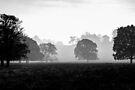 Misty morning by Sara Sadler