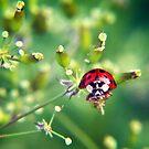 Ladybug on green by Vicki Field