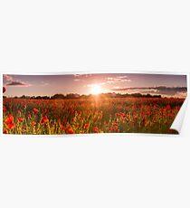 Poppy field, Bonnyrig Poster