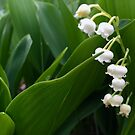 Lily of the Valley 2 by Christine  Wilson