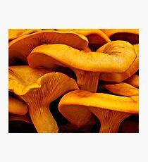 Jack-O-Lantern Mushroom Photographic Print