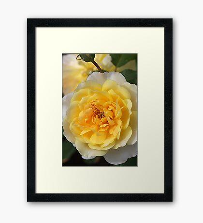 Love Of The Rose Framed Print