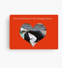 Sealing Love: The Strangest Places Canvas Print