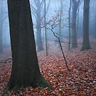 Vestiges of Autumn by Ursula Rodgers Photography