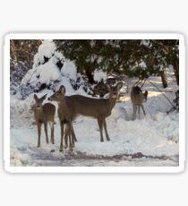Winter Excursion Sticker