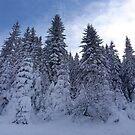 Winter in Kopaonik by Ana Belaj