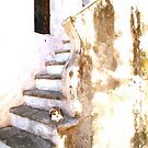Cat on the steps of a staircase of the historical center of Tortora by Giuseppe Cocco