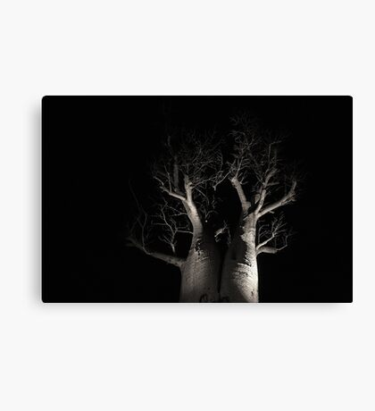 Boab Tree  Canvas Print