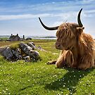 Highland Cow. Isle of Lewis, Outer Hebrides. Scotland. by PhotosEcosse