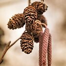 Catkins and cones by JEZ22
