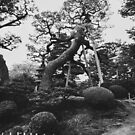 Black and White Shot of Old Trees in Japanese Garden by visualspectrum